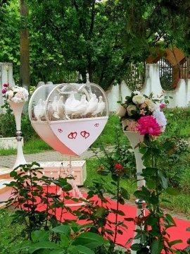 Porumbei nunti Craiova