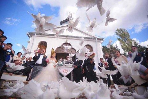 Porumbei nunta Craiova