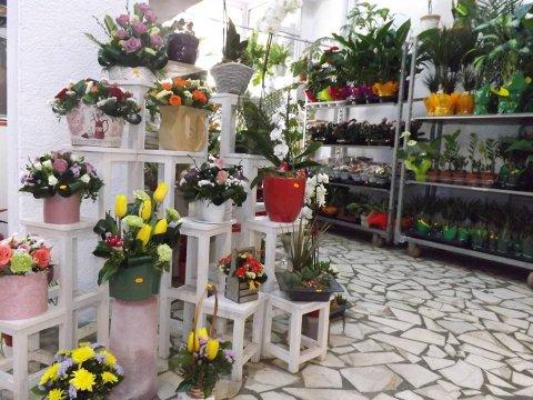 Floraria Flori de mai interior